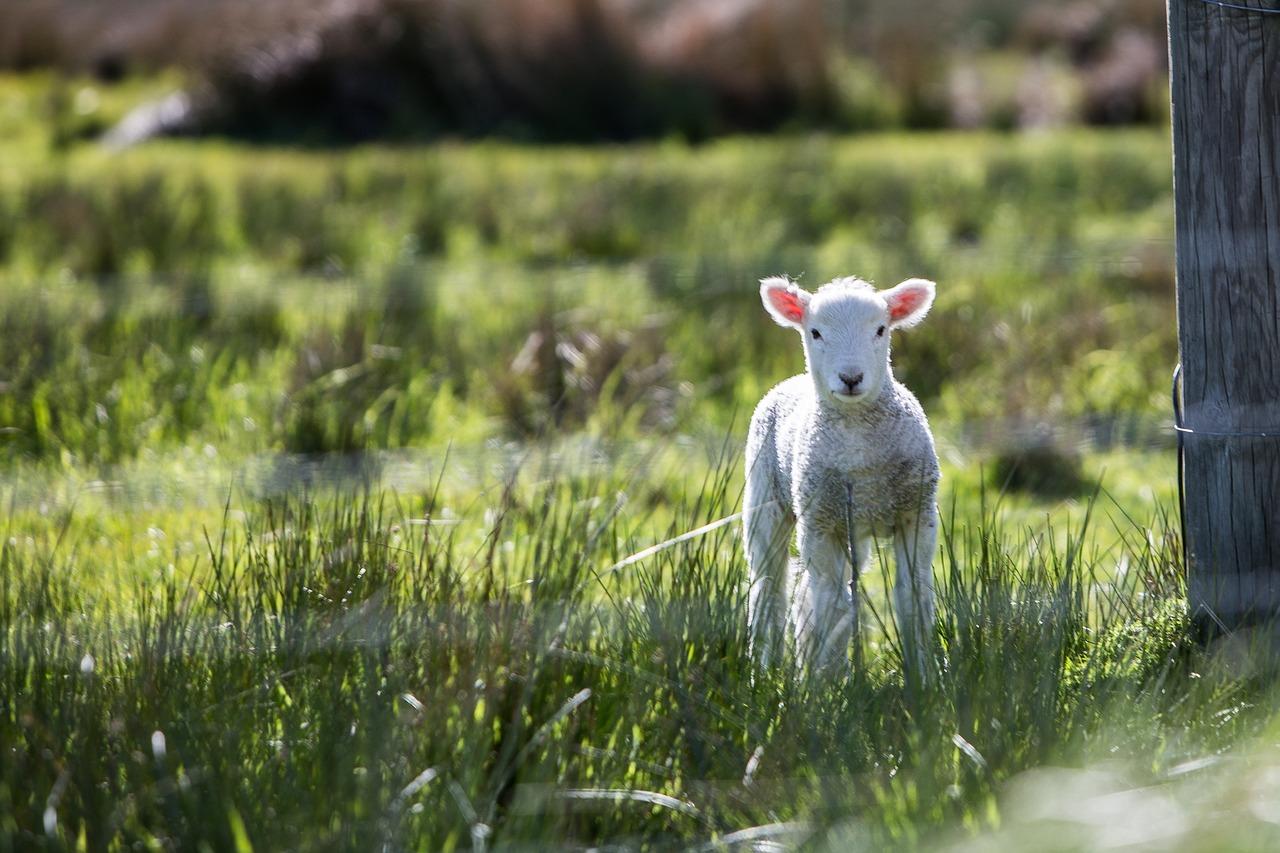 Start der Tierschutzlehrer-Weiterbildung 2019
