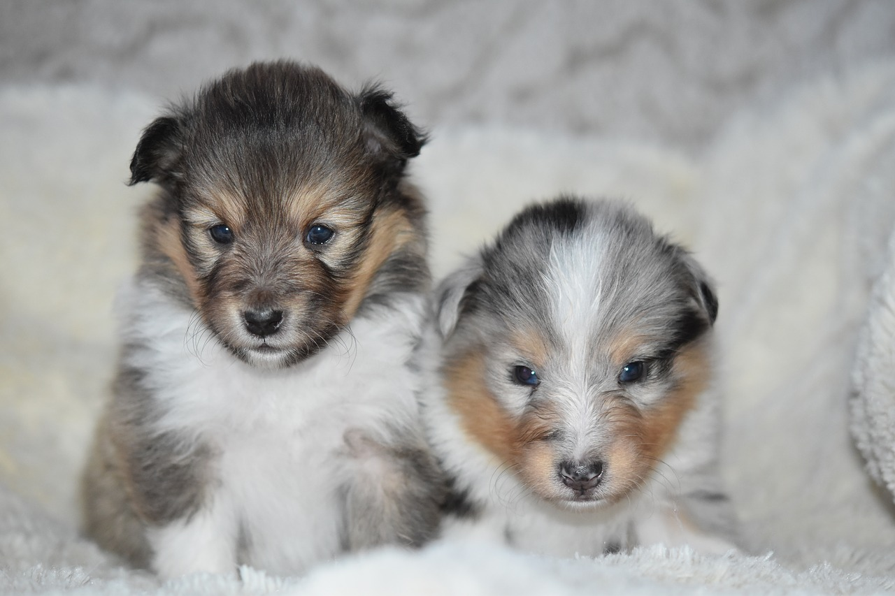 """Augen auf beim Kauf!  -Die Tierschutzorganisation TASSO e.V. warnt zum """"Tag der Welpen"""" vor illegalem Welpenhandel"""