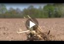 Dürre in Deutschland macht Felder zu Staubwüsten
