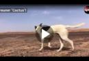"""Streuner """"Cactus"""" läuft Ultra-Marathon in Sahara mit"""