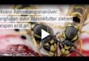 Wespenzeit beginnt: So schützt ihr euch wirksam vor Wespenstichen