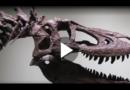 T-Rex auf Ebay sorgt für Empörung bei Wissenschaftlern
