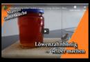 Löwenzahnhonig selber machen / veganer Honig /