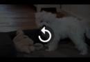 Hurra – Es ist ein Welpe. Der richtige Schlafplatz – Der Welpentrainer