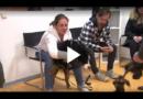 Hurra – Es ist ein Welpe. Der erste Tierarztbesuch als Welpe