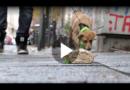 Hurra – Es ist ein Welpe. Lektion: Nichts von der Straße fressen