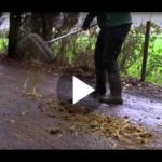 Hurra – Es ist ein Welpe. Lektion: Duftende Verlockungen beim Spaziergang