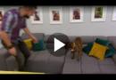 Hurra – Es ist ein Welpe.Lektion: Runter vom Sofa