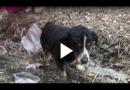 Lebendig begraben: Totgeglaubter Hund kehrt zu Besitzern zurück