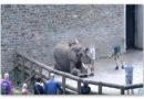 Zum Tag der gewaltfreien Erziehung fordert PETA ein Verbot von Elefantenhaken, Peitsche und Co. in Zoos und Zirkussen