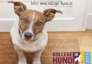 Aktionstag Kollege Hund – Tierfreundliche Unternehmen gesucht