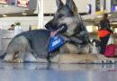 Rauschgiftspürhund vom Hauptzollamt Frankfurt am Main erschnüffelt 630 Gramm verflüssigtes Kokain in Spraydosen