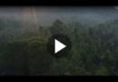 Regenwald-Killer Palmöl: So kannst du im Alltag darauf verzichten