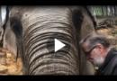 35 Jahre später: Elefantenkuh erkennt ehemaligen Pfleger