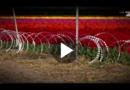Tulpenzerstörende Touristen verärgern Gärtner in den Niederlanden