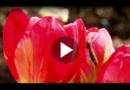 Klimawandel: Exotische Mückenarten bald in ganz Europa?