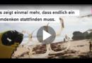Gestrandete Wale in Deutschland: Mägen voll Plastikmüll!