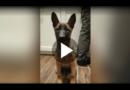 Findelhund Jack macht Polizei-Karriere