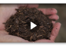 Öko-Bestattung: Leichen als Kompost