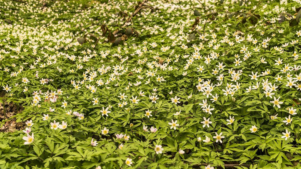 Die Gartenrowdys: Sauerklee