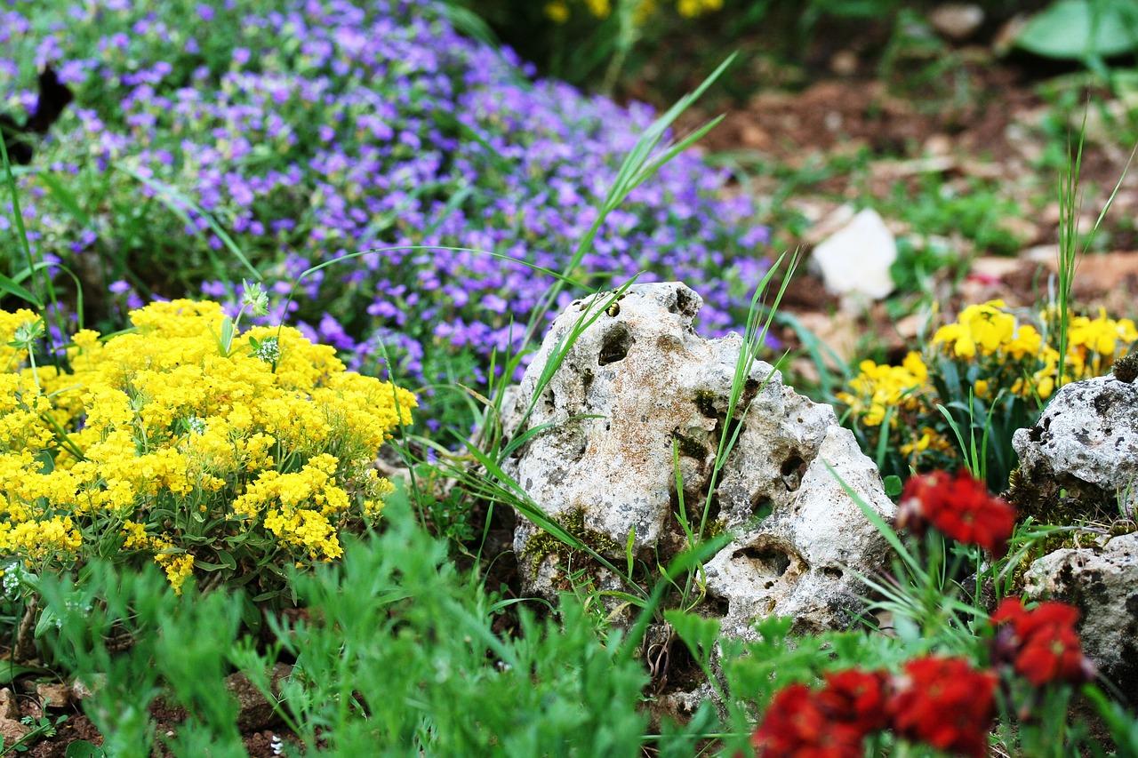 Der Motzkopf zum Thema: Steingärten sollen in Städten verboten werden