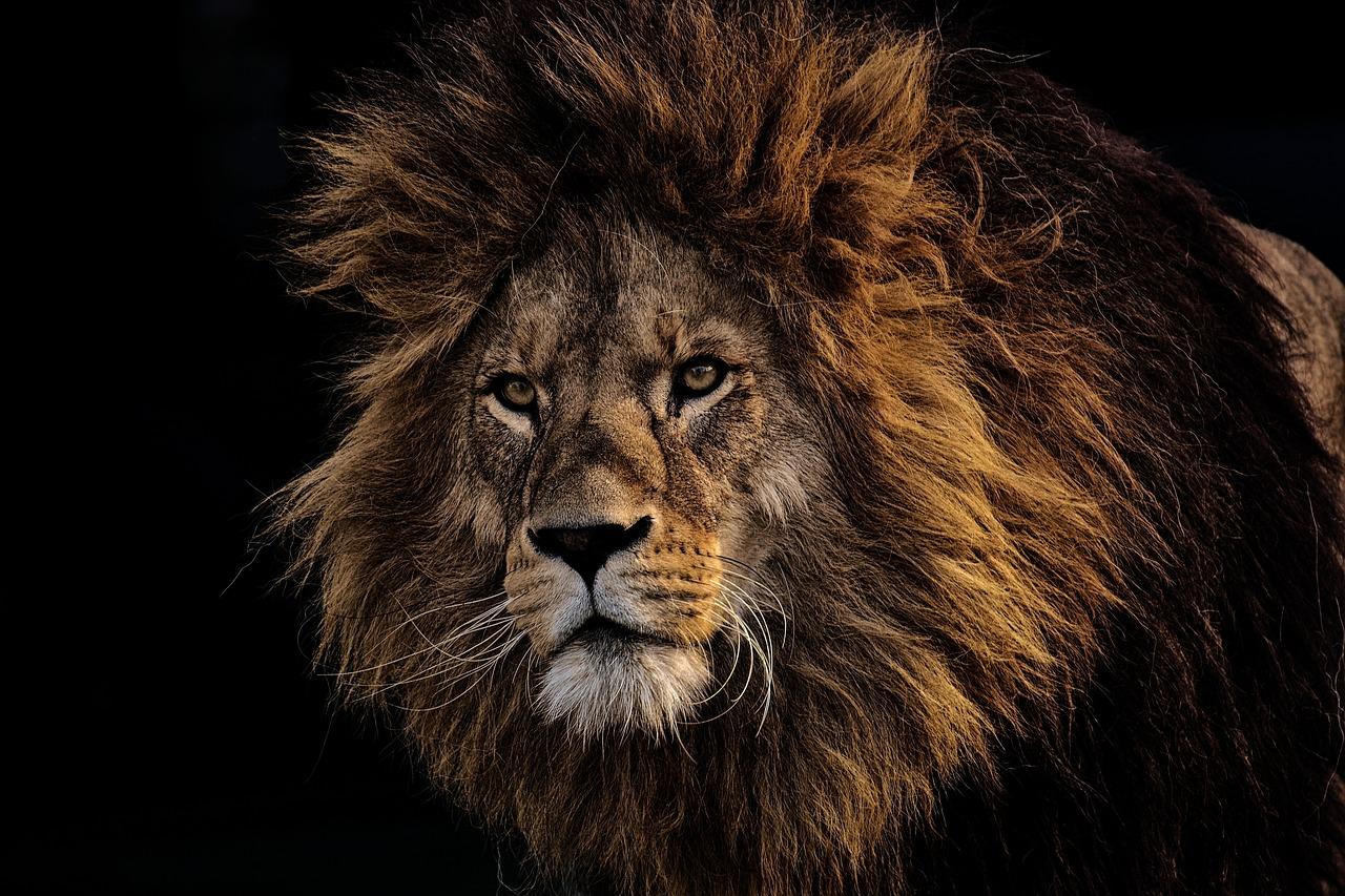Zwei Löwen greifen Pfleger im Serengeti-Park Hodenhagen an – PETA warnt: Wildtiere in Gefangenschaft gefährden Besucher und Mitarbeiter