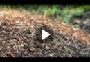 So werden Sie Ameisen ohne Gift wieder los
