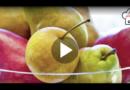 N wie Nashi-Birne: Japanisches Obst im Apfel-Look