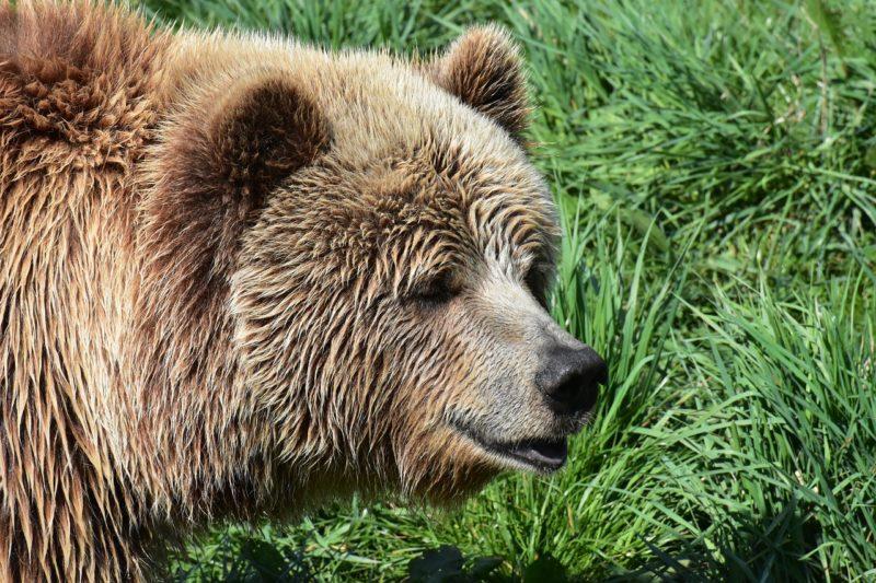 Vor dem Tore steht ein Bär