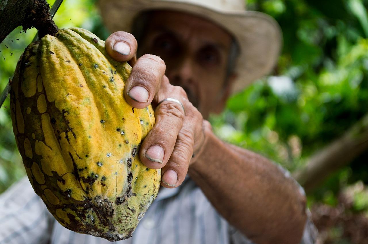 Staatliche Zuckerförderung im Schulmilchprogramm bundesweit gestoppt: NRW erklärt als letztes Bundesland Ende der Kakao-Subvention – foodwatch fordert verpflichtend ausgewogene Essensangebote an Schulen