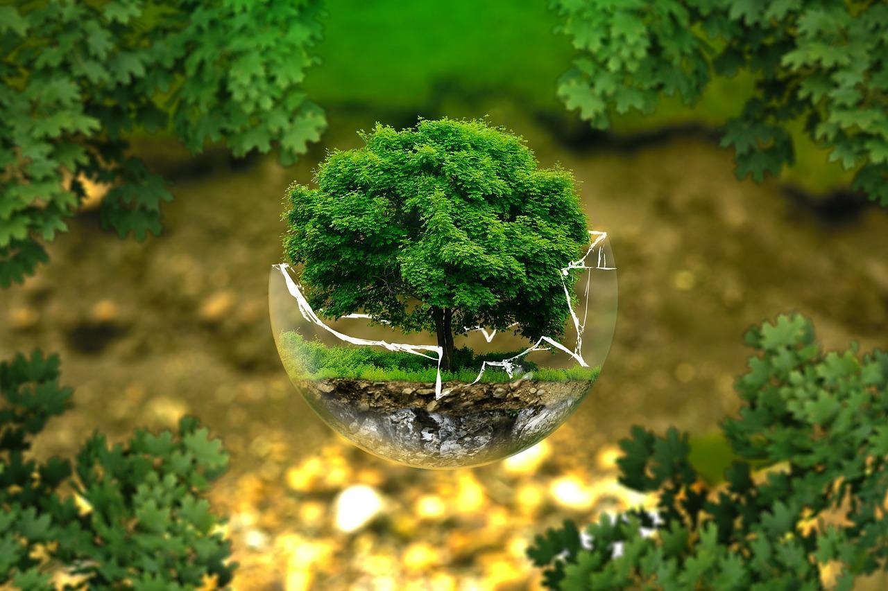 """Europa nach der """"Klimawahl"""": Schutz von Umwelt und Natur muss oberstes Ziel der EU sein"""