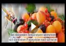 Nie mehr Fruchtfliegen: Mit diesen Tipps werdet ihr die Plagegeister los – Hausmittel im Test