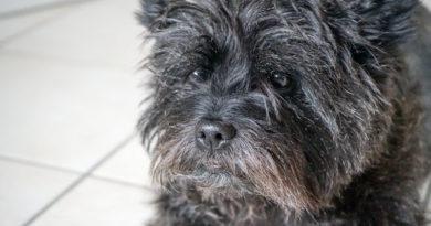 Rechtzeitig aufs Hundeherz hören Frühzeitig diagnostiziert lassen sich Auswirkungen von Herzerkrankungen spürbar mildern