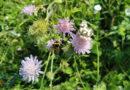 Neues Insektenschutzprogramm ist wichtiger Schritt in richtige Richtung