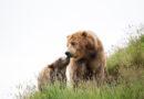 Die neue PETA US-Kampagne des Oscar-Nominierten soll Besucher von Tierausbeuterbetrieben fernhalten