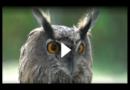 Auch in Deutschland vorstellbar? Seebad vertreibt aufdringliche Möwen mit Raubvögeln