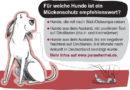 Gefährliche Stiche: Für welche Hunde ist ein Mückenschutz empfehlenswert?