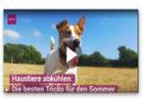 Haustiere bei Hitze abkühlen: Die besten Tricks für den Sommer