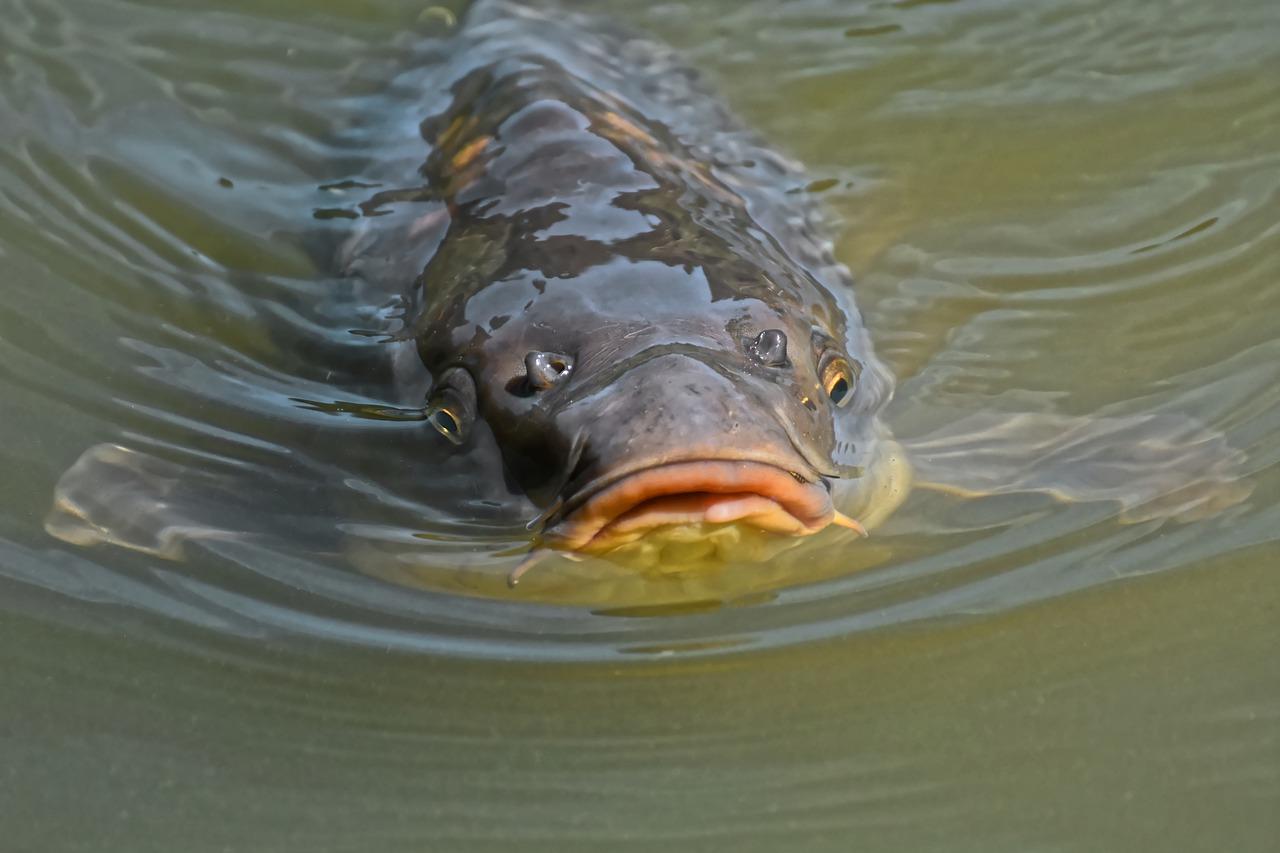 Unbekannte verunreinigen Bach: Tausende Fische in Zuchtteichen gestorben