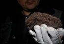 Winterquartier gesucht – PETA gibt Tipps für einen igelfreundlichen Herbstgarten