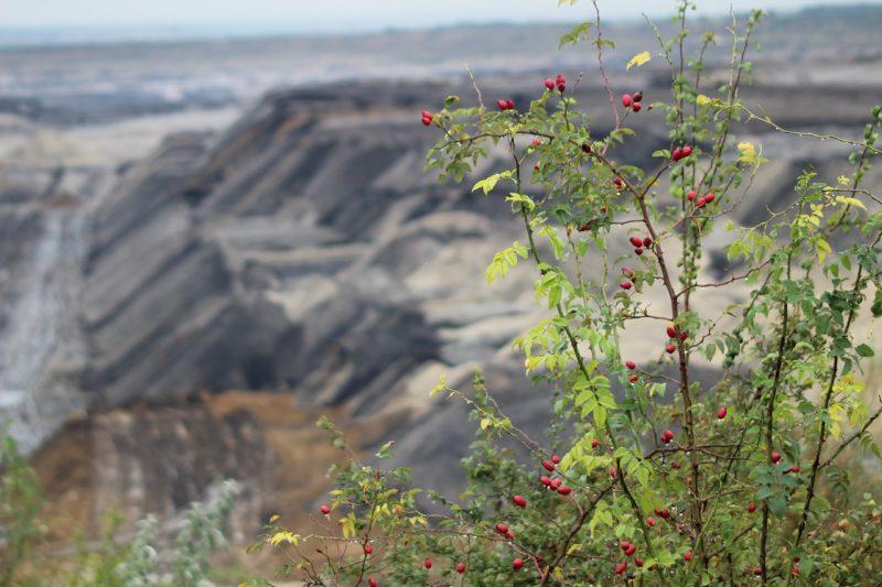 Bürgerbegehren kassel kohlfrei 2023 für den Kohleaustieg in Kassel  erfolgreich gestartet