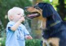 """""""Puh, du hast Mundgeruch!"""" –  Zahngesundheit bei Haustieren wird häufig vernachlässigt"""