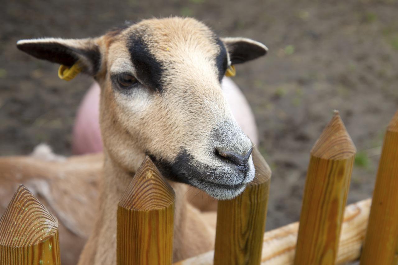Deutscher Tierschutzbund fordert Berücksichtigung von Tierschutzaspekten
