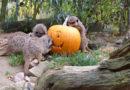 Halloween-Wochenende  im Tierpark Sababurg am 26. und 27. Oktober
