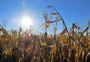 In Zeiten des Klimawandels wirtschaftlich bleiben