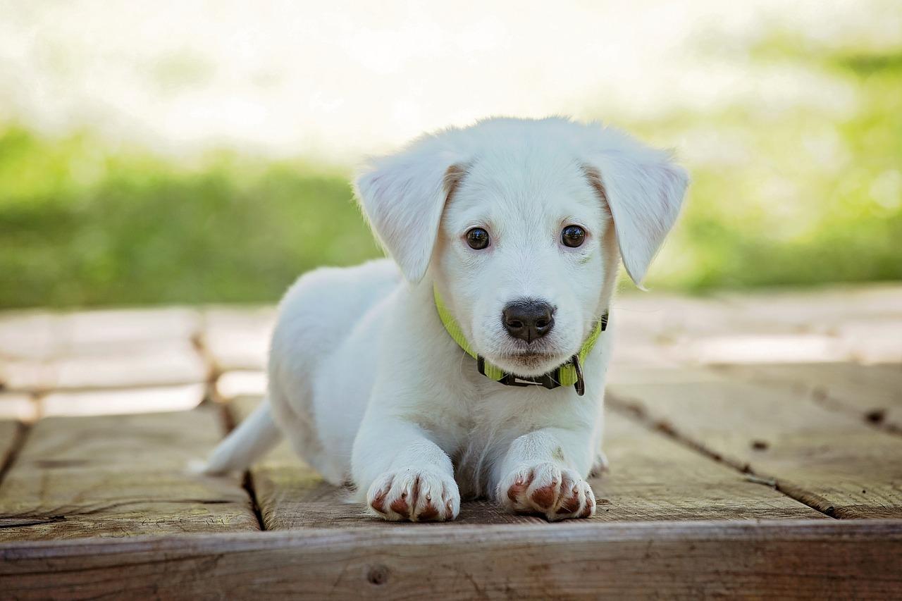 Welthundetag am 10.10.! Tausende Hunde warten im Tierheim auf ein Zuhause