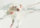 Bundesregierung muss Tierversuchsrecht korrigieren