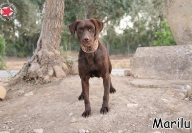 Tier der Woche: Marilu