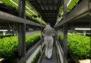 """Vertikaler Pflanzenanbau: """" planet e."""" im ZDF über Hightech-Farmen"""