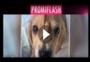 Einhorn-Welpe: Goldie mit Rute im Gesicht wird zum Netz-Hit!